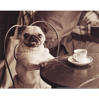 Evive Designs Cafe Pug by Jim Dratfield Photographic Print