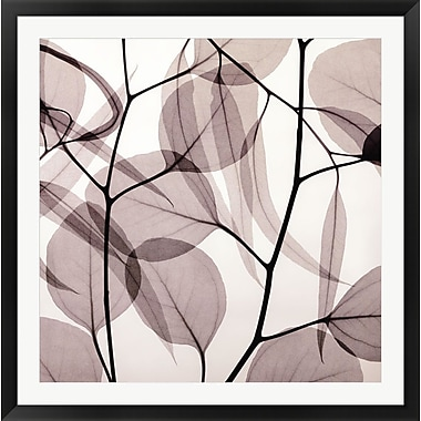 Evive Designs Eucalyptus Leaves [Positive] by Steven N. Meyers Framed Photographic Print