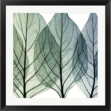 Evive Designs Celosia Leaves II by Steven N. Meyers Framed Photographic Print
