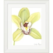 Evive Designs Orchid Beauty II by Jennifer Goldberger Framed Painting Print