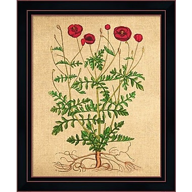 Evive Designs Poppies Vintage Style by Evie Alessandria Framed Painting Print