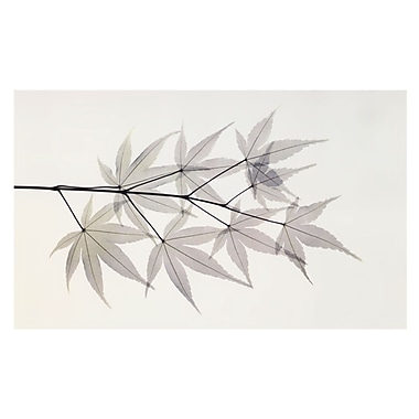 Evive Designs Japanese Maple Photography by Albert Koetsier Graphic Art