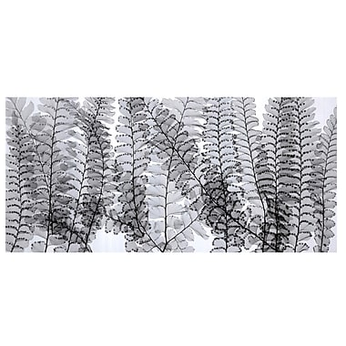 Evive Designs Maidenhair Ferns by Steven N. Meyers Photographic Print