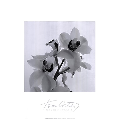 Evive Designs Orchid Spray II by Tom Artin Photographic Print