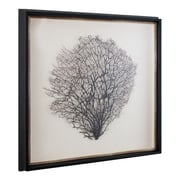 Mirror Image Home Natural Sea Fan Framed Graphic Art