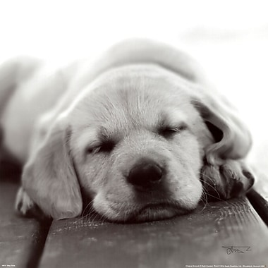 Evive Designs Nap Time Photography by Seth Casteel Photographic Print