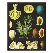 Evive Designs Vintage Olives Wall Art (Print Only)