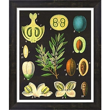 Evive Designs Vintage Olives by Evie Alessandria Framed Graphic Art