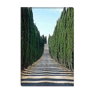 iCanvas 'Trip Treepath' by Liz Zernich Photographic Print on Canvas; 18'' H x 12'' W x 0.75'' D