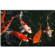 iCanvas Koi Carp Photographic Print on Canvas; 8'' H x 12'' W x 0.75'' D