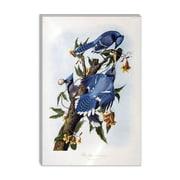 iCanvas 'Blue Jay' by John James Audubon Painting Print on Canvas; 18'' H x 12'' W x 0.75'' D