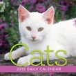LANG® Avalanche Cats 2015 Desk Boxed Calendar