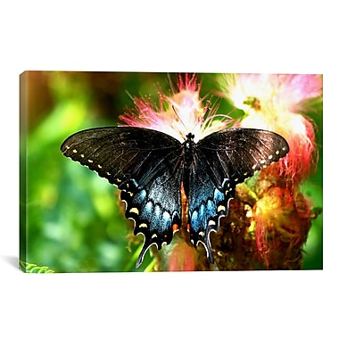 iCanvas Photography Swallowtail Butterfly Photographic Print on Wrapped Canvas