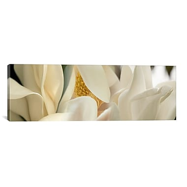 iCanvas Panoramic 'Magnolia Flowers' Photographic Print on Canvas; 20'' H x 60'' W x 0.75'' D