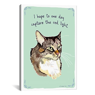 Tiny Confessions Maine Coon Chasing Lights by Christopher Rozzi Painting Print on Wrapped Canvas