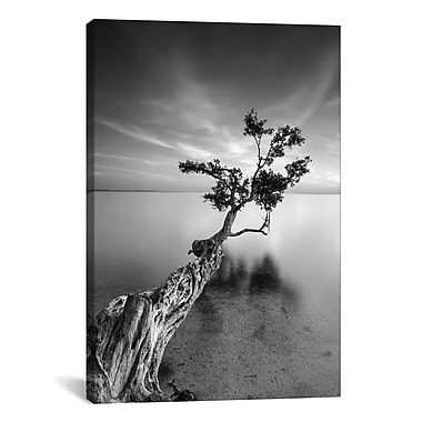 iCanvas 'Water Tree V' by Moises Levy Photographic Print on Canvas; 18'' H x 12'' W x 0.75'' D