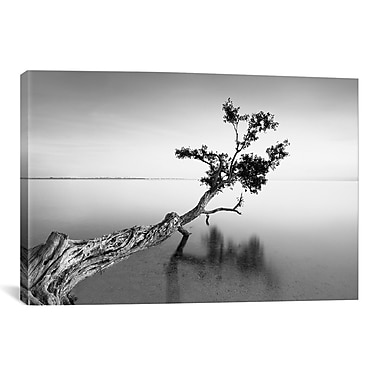iCanvas 'Water Tree IX' by Moises Levy Photographic Print on Canvas; 12'' H x 18'' W x 0.75'' D