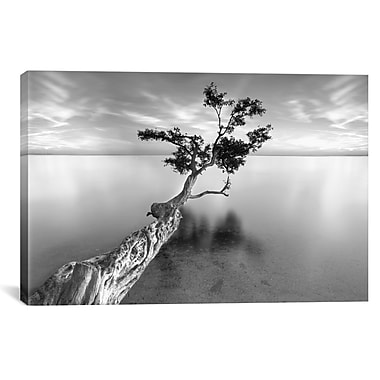 iCanvas 'Water Tree XIII' by Moises Levy Photographic Print on Wrapped Canvas