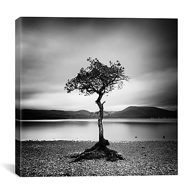 iCanvas Millarrochy Tree by Nina Papiorek Photographic Print on Wrapped Canvas