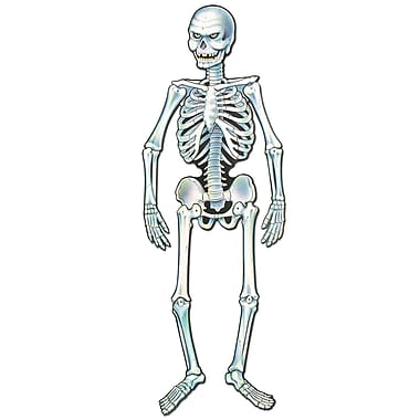 Art-Print Jointed Skeleton, 3' 8