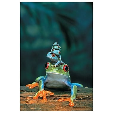 Frogs, Stretched Canvas, 24