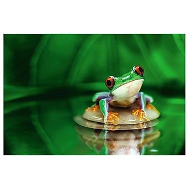 Red-Eyed Tree Frog, Stretched Canvas, 24