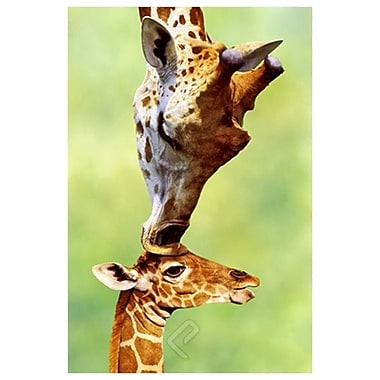 Giraffe Mom, Stretched Canvas, 24