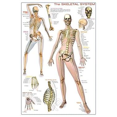 Skeletal System, Stretched Canvas, 24