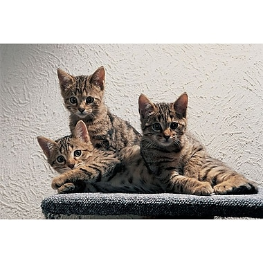 Cat Family, Stretched Canvas, 24