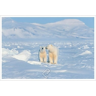 Polar Bears, Stretched Canvas, 24
