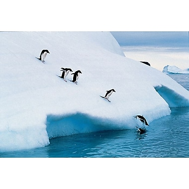 Penguins Jumping of Glacier, Stretched Canvas, 24