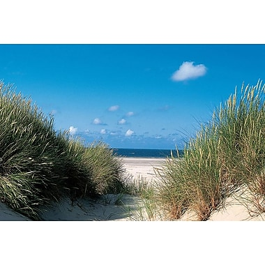 Beach Path Through The Dunes, Stretched Canvas, 24