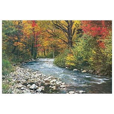 Forest Creek I, Stretched Canvas, 24