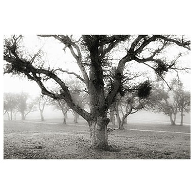Oak Tree in the Fog de Settle, toile, 24 x 36 po