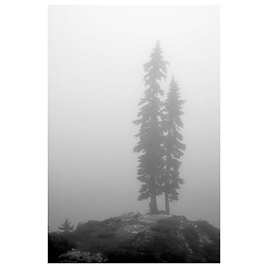 Two Trees Mt Washington by Settle, Canvas, 24