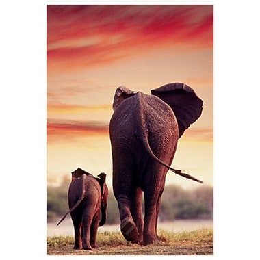Elephant Walking with Calf, Stretched Canvas, 24