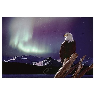Eagle Aurora Borealis, Stretched Canvas, 24