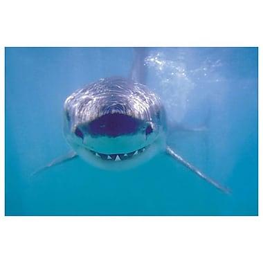 Grand requin blanc II, toile tendue, 24 x 36 po