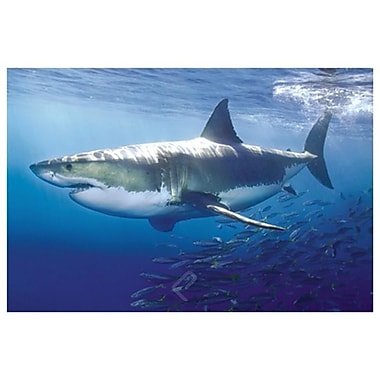 Grand requin blanc III, toile tendue, 24 x 36 po