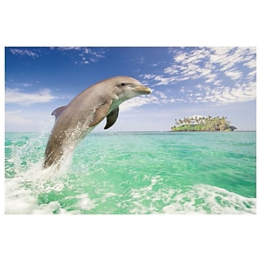 Dolphin Leaping, Stretched Canvas, 24