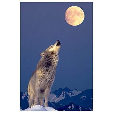 Gray Wolf Howling at Moon, Stretched Canvas, 24