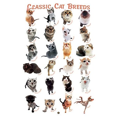 Cat Breeds by HanaDeka, Canvas, 24