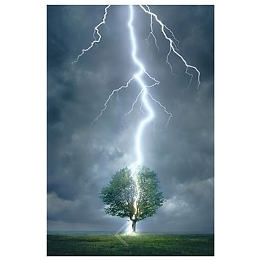 Lightning Striking Tree, Stretched Canvas, 24