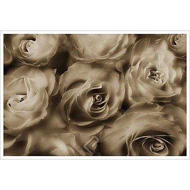 Sepia Roses by Magus, Canvas, 24