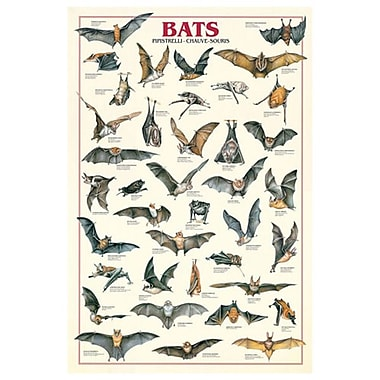 Bats, Stretched Canvas, 24