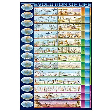 The Evolution of Life, Stretched Canvas, 24