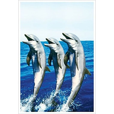 Dancing Dolphins, Stretched Canvas, 24