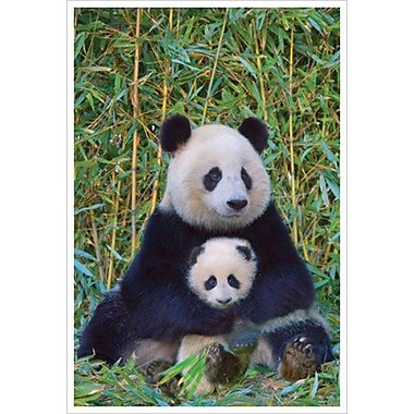 PanDa And Baby, Stretched Canvas, 24