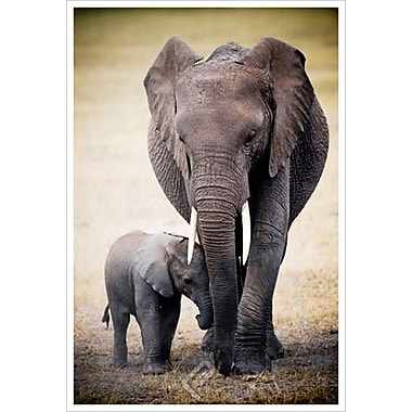 Elephant and Baby, Stretched Canvas, 24