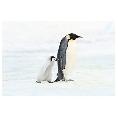 Penguin and Baby, Stretched Canvas, 24